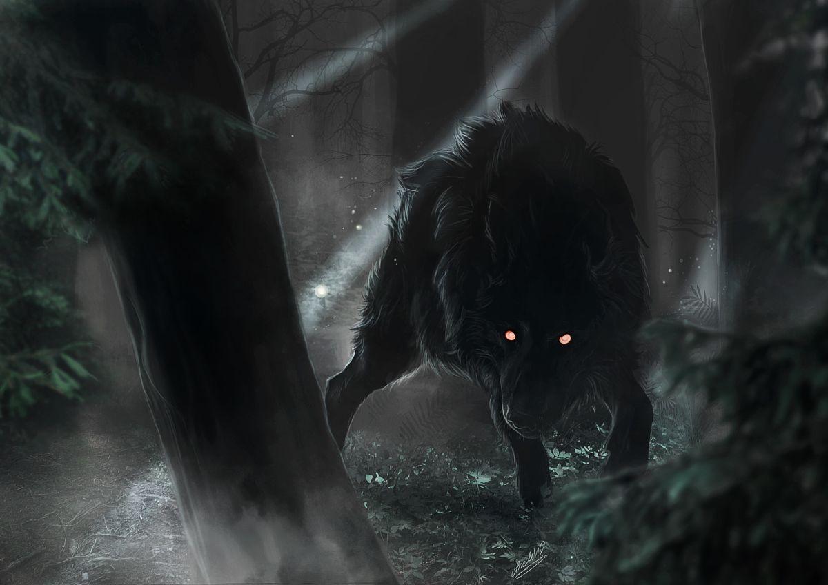 @darkdirewolf